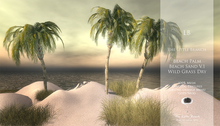 LB_BeachPalm_MP