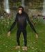 chimp mesh 5 prim