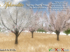 Aphrodite Spring Cherry tree- Four colors fat pack- Scripted trees with realistic wind syste, falling petals & cherries