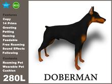 Doberman_Box
