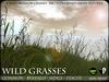 Wild Grasses - Common Grass, Buffalo Grass, Pendulous Sedge and Fescue