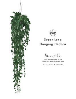 Soy. Super long Hanging Hedera