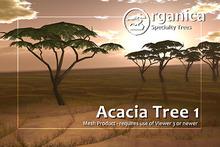 [ Organica ] Acacia Tree 1