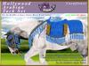 *E* Hollywood Arabian Saddle Set [Boxed] RH Gypsy Vanner Cornflower