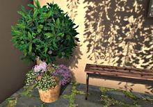CJ Mediterranean Plant round + Hydrangea + flashing light ~ c + m ~