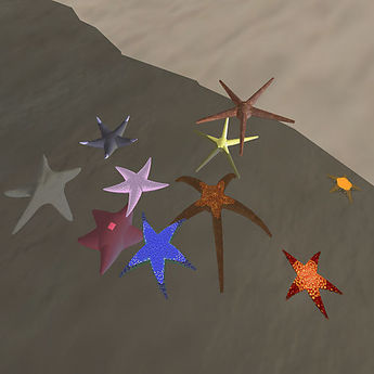 Starfish ~ Assorted, all different colours & sizes!