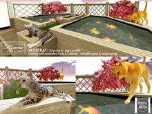 Cats, Pond, fish, butterflies