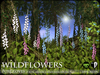 Flowers - Wild Flowers - Foxgloves