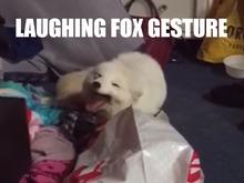 Laughing fox gesture