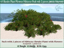 v3 Shrubs Tropical Plant Flowers Hibiscus. Pack 2 pcs. M/T