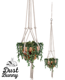 dust bunny . darling hanging plant