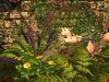 Msd   castle ruins garden   riva5a 001