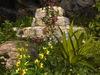 Msd   wall ruins garden   9 6a 001