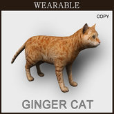 Wearable GingerCat