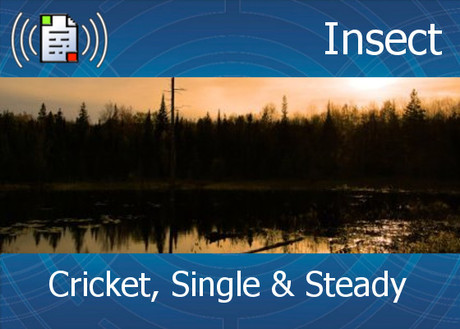 Atmo-Insects - Cricket, Single & Steady 0:20