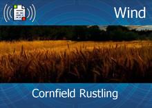 Atmo-Wind - Cornfield Rustling 1:50