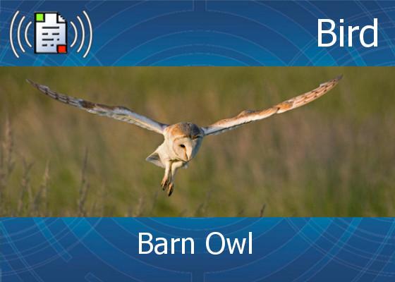 Atmo Sound Orb / Bird - Barn Owl - 0:30