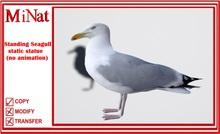 MN Seagull statue