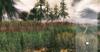 Little branch snakeweed %284seasons%29