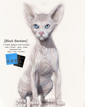 [Black Bantam] Sphynx Cat Male & Female