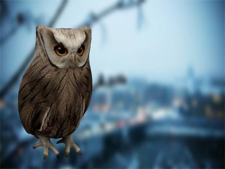 .::VB::.Horned Hoot Owl