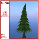 MN Large pine tree
