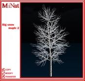 MN Big snow maple 2