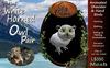 CKit Falconry Mini White Horned Owl Pair