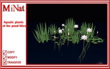 MN Aquatic plants of the pond lilies