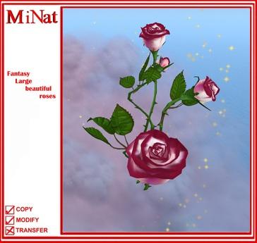 MN Fantasy Large beautiful roses