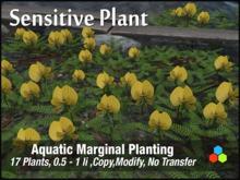 CR  Pond Plants - Sensitive Plant Delivery Crate