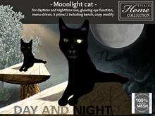 Halloween, Cat, black, bench
