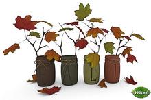 -Mint- Fall Jars
