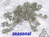 Ancient Virginia Live Oak SEASON C/M