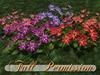 ~AB~ Fantasy Star Flower ~ Full Perm Mesh Plant ~ 1 LI