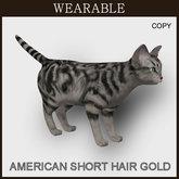 [TomatoPark] Wearable American Shorthair Cat