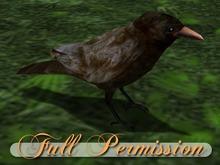 ~AB~ Standing Crow ~ Full Perm Mesh ~ Strong LOD ~ 0.5 LI