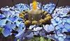 Cj autumn table wreath  with blue hydrangea 02 001