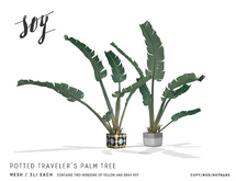 Soy. Potted Traveler's Palm Tree [addme]