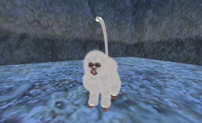 Baby Snow monkey Avatar