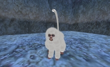 Baby Snow monkey Avatar