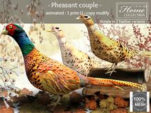Pheasant, couple