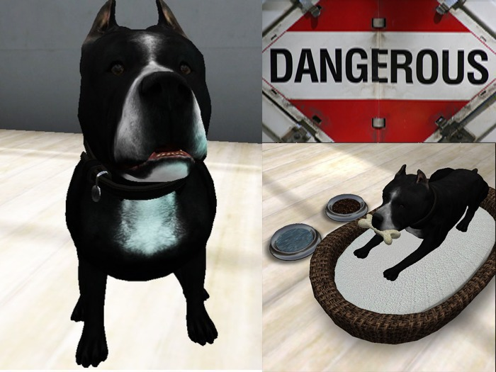 Pitbull Black & White dog + with all accesories