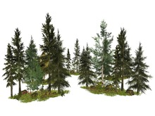 MSD - Forest Border Gardens - Set of Five (15-21 LI) C/M
