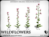 Wildflowers  campion   ref 1