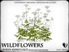 Wildflowers  queen anne lace   ref 4