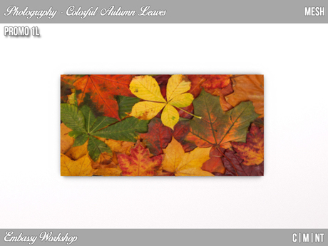EW - Promo - Colorful Autumn Leaves - Photography