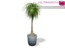 %50SUMMERSALE FULL PERM 2LI MESH Beaucarnea Recurvata Potted Home | Office Patio | Interior Plant Tree