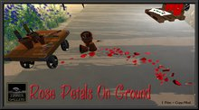 Zinner Gallery - Rose Petals on Ground