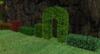 Hedges pic1